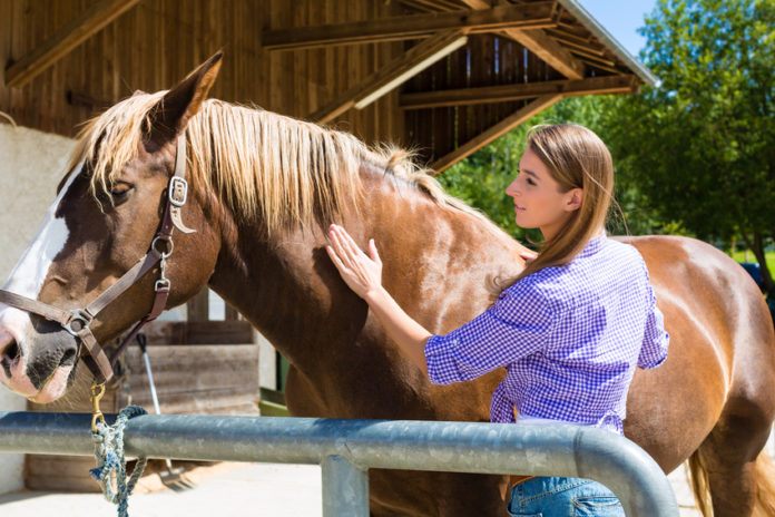 Antizeckenmittel für Pferde