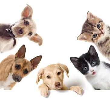 Antizeckenmittel für Tiere