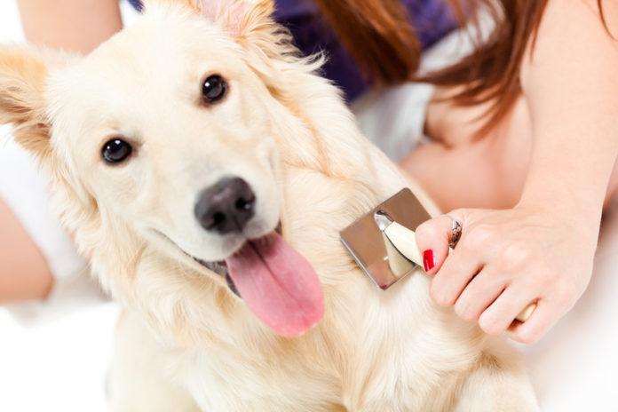 Antizeckenmittel für Hunde
